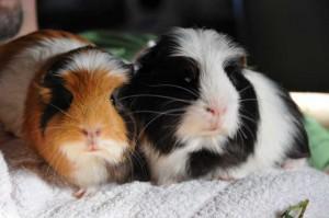 Partnervermittlung für tierfreunde