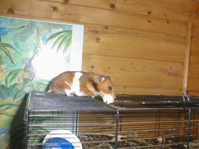 hamster011.jpg