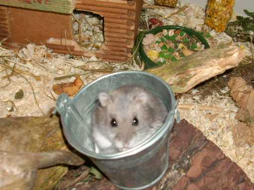 hamsterdanke.jpg