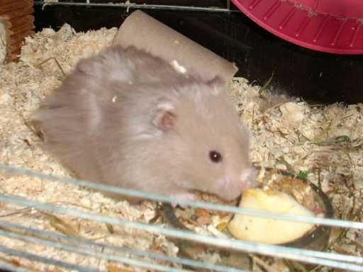 hamsterfridolin01.jpg