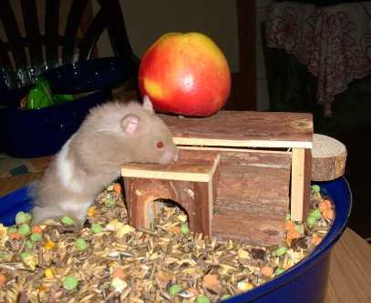 hamstertraum.jpg