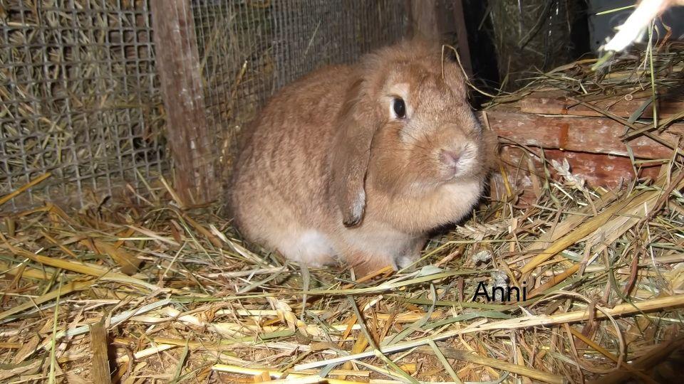 tierschutzwelt und little animals vermittlung kaninchen meerschweinchen hamster. Black Bedroom Furniture Sets. Home Design Ideas