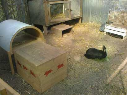 tierschutzwelt und little animals blog archive biete wohnung zum entsorgen suche gro e. Black Bedroom Furniture Sets. Home Design Ideas
