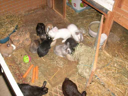 Tierschutzwelt und little animals blog archive viele for Kaninchenstall einrichten