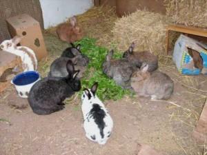 kaninchengruppe011