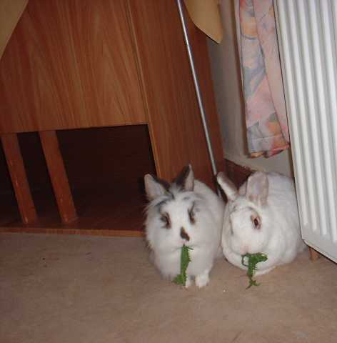 kaninchenpaar_th.jpg