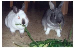 kaninchenpaarpaulpaula
