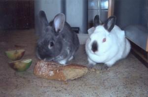 kaninchenpaarpaulpaula01