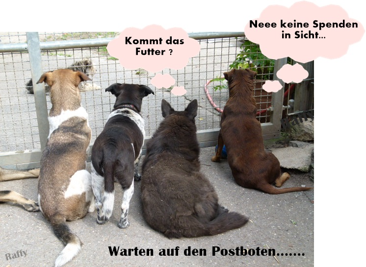 kleintiere in deutschland