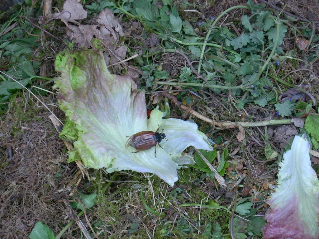 Tierschutzwelt und little animals tiere im garten und balkon for Obstfliegen in pflanzen