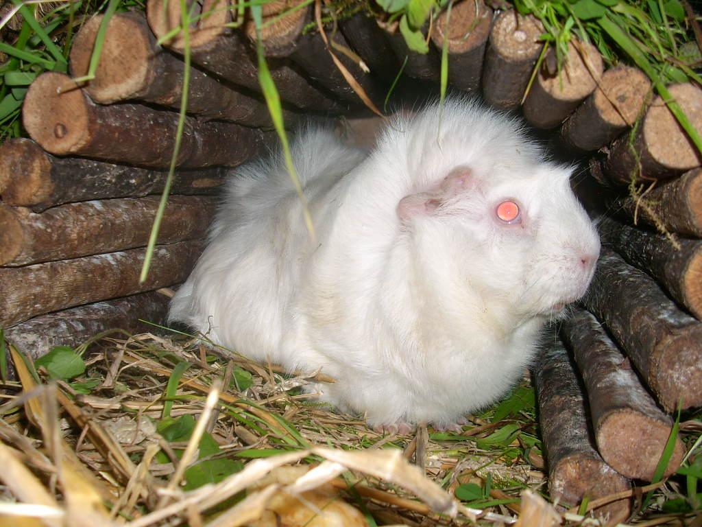 tierschutzwelt und little animals blog archive kaninchen und meerschweinchennotf lle in der. Black Bedroom Furniture Sets. Home Design Ideas