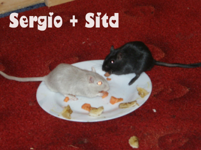 sergio-und-sitd.jpg