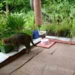 terrassemkatzennetz