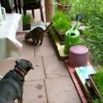 terrassemkatzennetz01