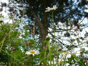 wildblumengrab